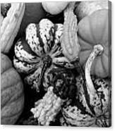 Fall Gourds Black And White Canvas Print