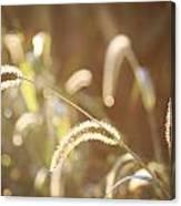 Fall Grass Canvas Print