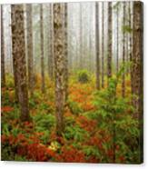 Fall Has Come Canvas Print