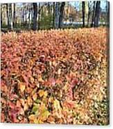 Fall Hedge Canvas Print
