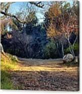 Fall In Cherry Creek Canvas Print