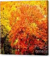 Fall In Full Bloom Canvas Print