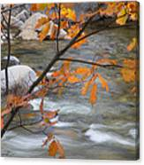 Fall In Nh 1 Canvas Print