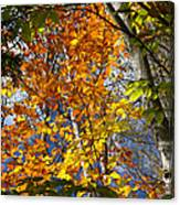Fall In Nh 2 Canvas Print