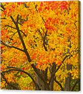 Fall In Pennsylvania Canvas Print