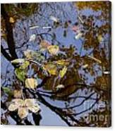 Fall In The Lake In Vienna No. 1 Canvas Print