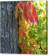 Fall In The Orchard Canvas Print