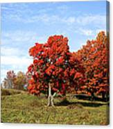 Fall In The Pastures Canvas Print