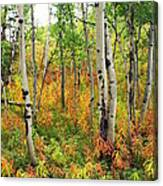 Fall In The Tetons Canvas Print