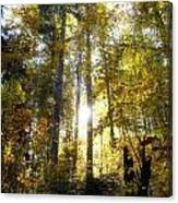 Fall In The Woods Close To The Elmau Canvas Print