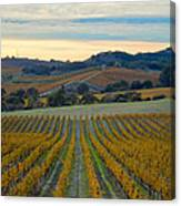Fall In Wine Country Canvas Print
