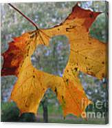 Fall Ing In Love Canvas Print