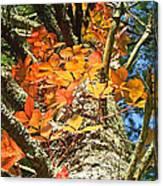 Fall Ivy On Pine Tree Canvas Print
