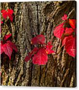 Fall Leaves Against Tree Trunk Canvas Print