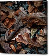 Fall Leaves And Acorns Canvas Print