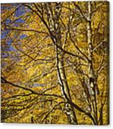 Fall Leaves And Trees In West Michigan No171 Canvas Print
