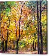 Fall Leaves At Indiana University Canvas Print