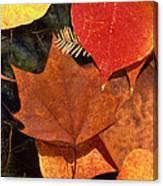 Fall Leaves I I Canvas Print