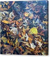 Fall Leaves In A Pond Canvas Print