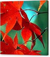 Fall Leaves In All Their Glory Canvas Print