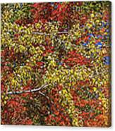 Fall Leaves In So Cal Canvas Print