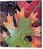 Fall Leaves I V Canvas Print