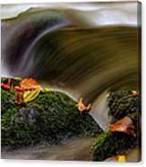 Fall Leaves On Mossy Rocks Canvas Print