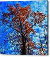 Fall Majesty Canvas Print