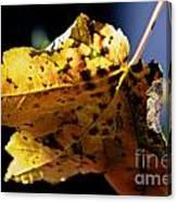Fall Maple Leaf Canvas Print