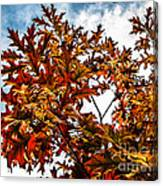 Fall Maple Leaves Canvas Print