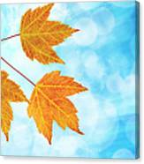 Fall Maple Leaves Trio With Blue Sky Canvas Print