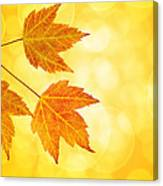 Fall Maple Leaves Trio With Bokeh Background Canvas Print