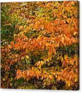 Fall Mix Canvas Print