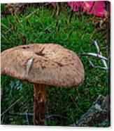 Fall Mushrooms Canvas Print
