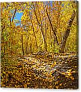 Fall On The Forest Floor Canvas Print