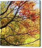 Fall Outstretched Canvas Print