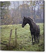 Fall Pasture Canvas Print