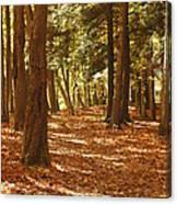 Fall Pathway Canvas Print