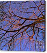 Fall Reflections By Diana Sainz Canvas Print