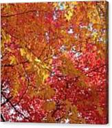 Fall Saint Louis 1 Canvas Print