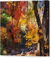 Fall Splendor  Canvas Print