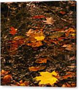 Fall Stream Bed Canvas Print