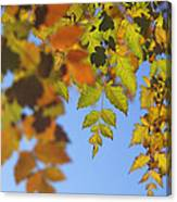 Fall Time Canvas Print