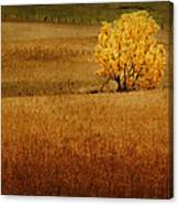 Fall Tree And Field #1 Canvas Print