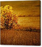 Fall Tree And Field #2 Canvas Print