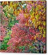 Fall Tree Leaves Canvas Print