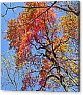 Fall Trees 2 Of Wnc Canvas Print