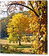 Fall Trees 4 Of Wnc Canvas Print