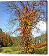 Fall Trees 5 Of Wnc Canvas Print