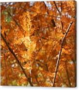 Fall Trees II Canvas Print